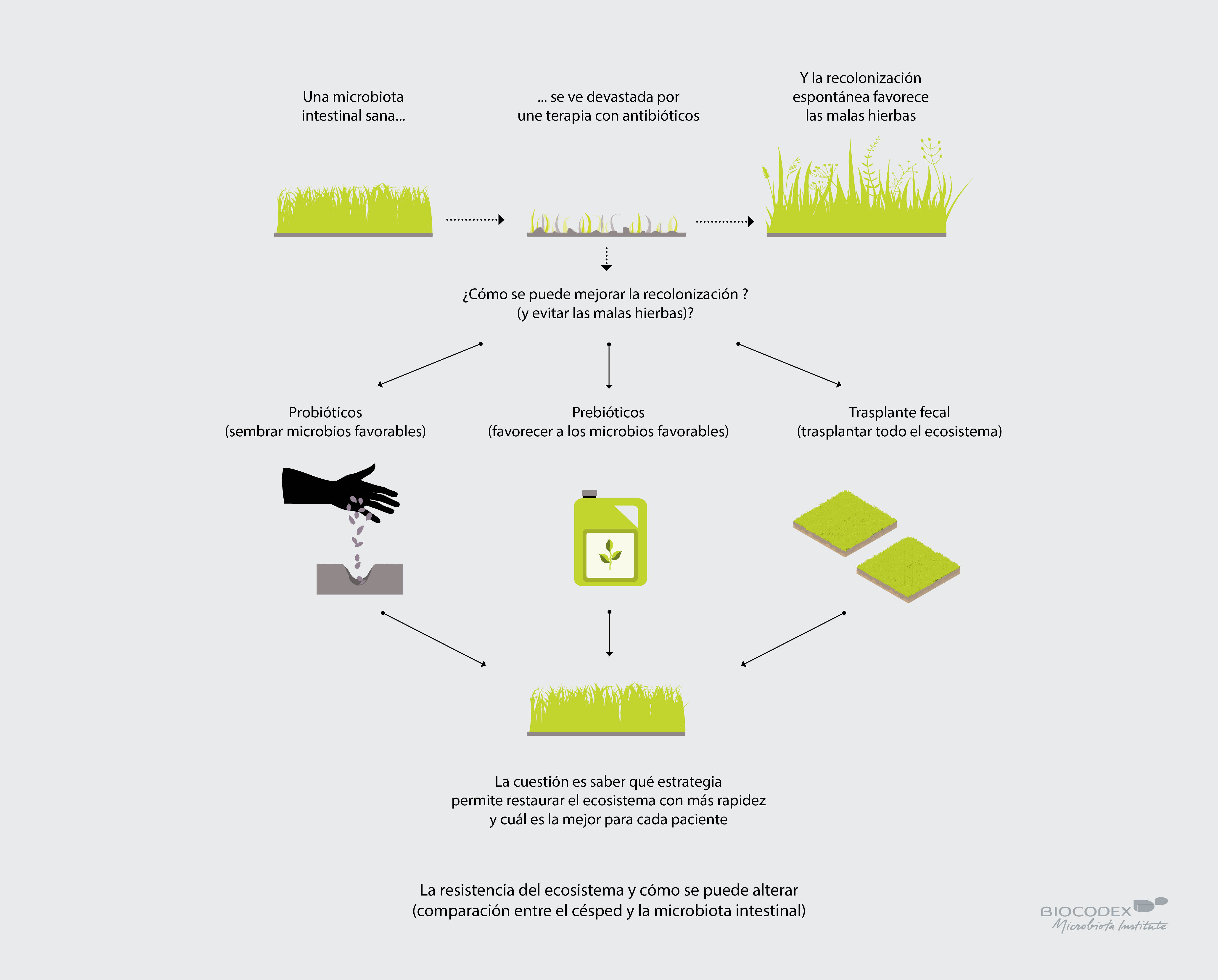 Infographie_pelouse_microbiote_ES